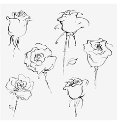 Hand drawn sketch of bud of roses vector image