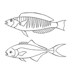Sketch line art fishes vector