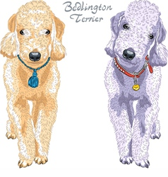 Two dogs Bedlington Terrier breed vector