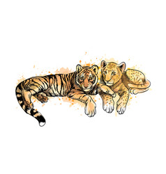 lion cub and tiger cub from a splash of watercolor vector image