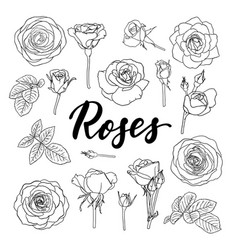 set black and white outline roses buds and vector image