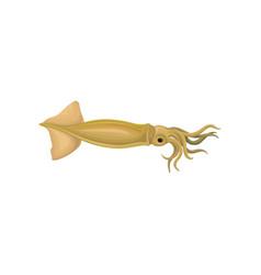 Squid ocean calamari cuttlefish vector
