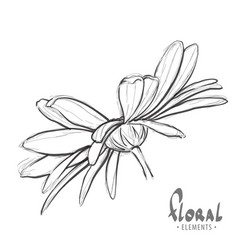 design sketch of daisies vector image