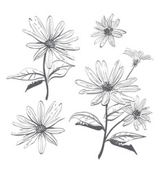 drawing flowers hand-drawn chamomiles vector image