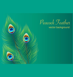 peacock feather background dark green vector image