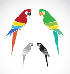 image of a parrot vector image vector image