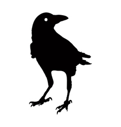 silhouette of a crows in different vector image