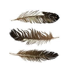 3 hand drawn black and white feathers vector image