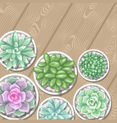 Card with succulents in pots echeveria jade vector