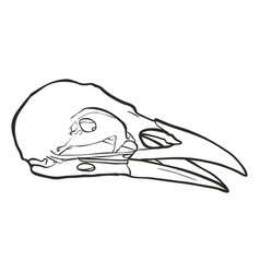 Hand drawn skull of a raven vector