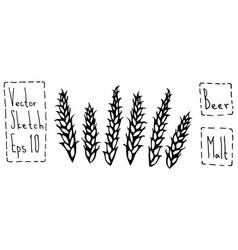 Malt doodle sketsh ears of barley beer bar vector