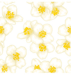Semless pattern branch white flower jasmine with vector