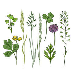 Wild flowers hand drawn set ink herbs in color vector