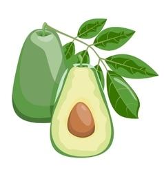 Avocado Healthy lifestile vector