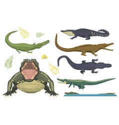 Cartoon green crocodile danger predator vector