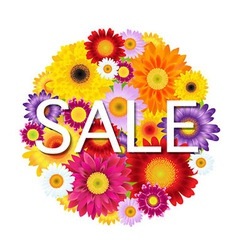 Colorful gerbers flowers ball sale vector