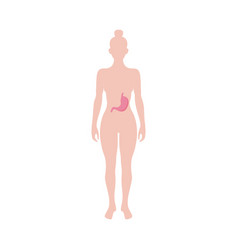 Female figure shape with stomach icon flat vector