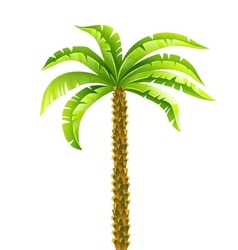 Tropical coconut palm tree vector image vector image