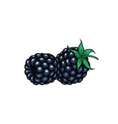 beautiful cartoon blackberry symbol summer vector image