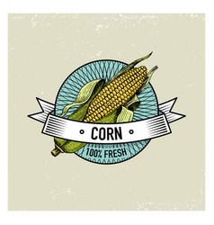 Corn vintage set of labels emblems or logo for vector