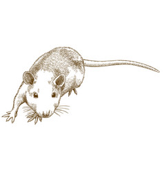 Engraving sneaking mouse vector
