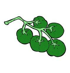 Green tomatoes on vine vector