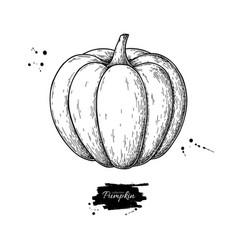 pumpkin drawing isolated hand drawn object vector image