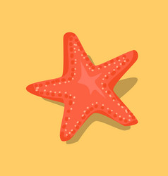 red starfish or sea star star-shaped echinoderm vector image