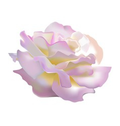 Rose petals vector