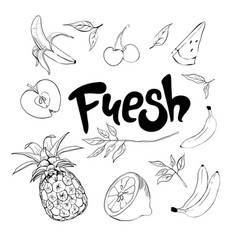 Set hand drawn doodle fruits fresh and tasty vector