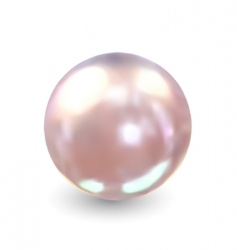 single pearl vector vector image