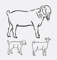 goat pet animal pose hand drawing vector image