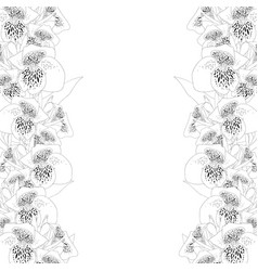 canna lily outline border vector image