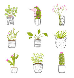 flowers in pots hand drawn vector image