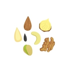 Nuts Product Rich In Folic Acid vector