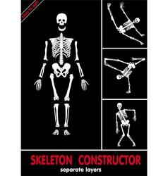 Human skeleton bones vector