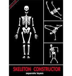 human skeleton bones vector image vector image