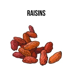 Pile of dried raisins sketch style hand drawn vector image