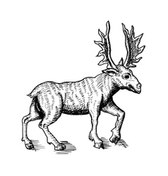 sketch deer vector image