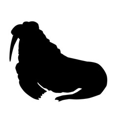 walrus side view vector image