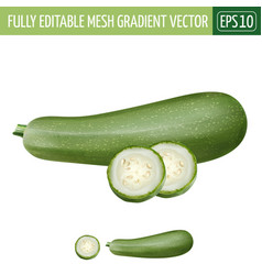 Zucchini on white background vector