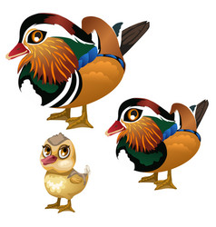 Family of birds on white background vector
