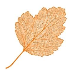 manually drawn leaf skeleton vector image
