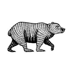 grizzly bear brown wild animal side view hand vector image