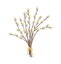 pussy willow branches vector image