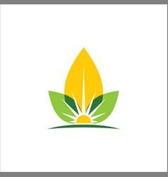 eco leaf sun organic logo vector image vector image
