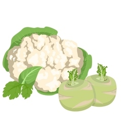 Cabbage and cauliflower vector