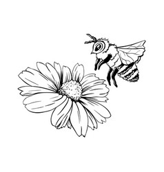 chamomile bud and bee pollination hand drawn ink vector image