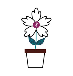 potted crocus flower natural decoration ornament vector image