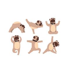 funny french bulldog doing yoga set cute dog vector image